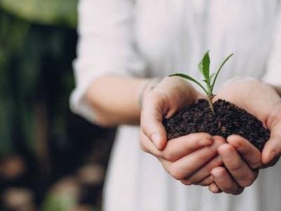 Criteris pel desenvolupament de l'activitat de planta de viver durant l'emergència sanitària per la COVID-19
